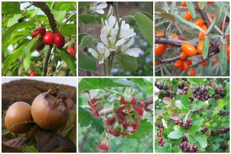 drobne ovoce