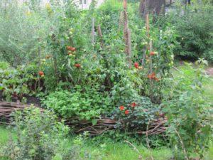 Zeleninovy zahon