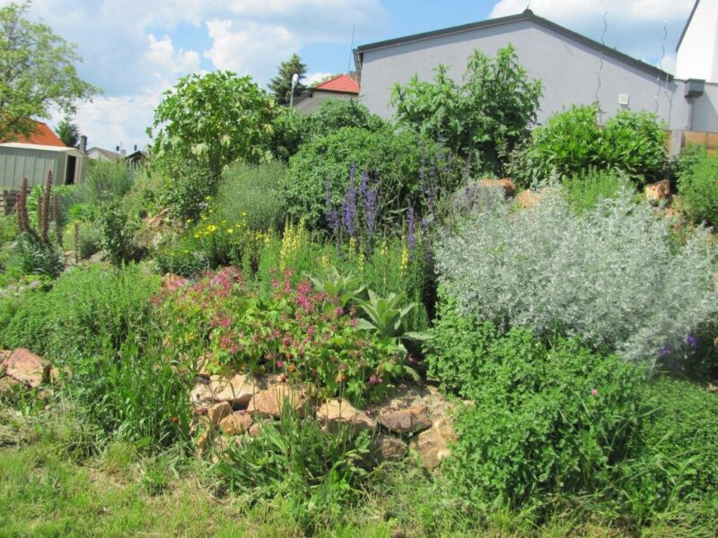 Zahrada2