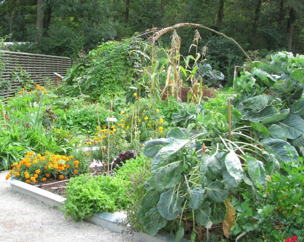 Zeleninova_zahrada