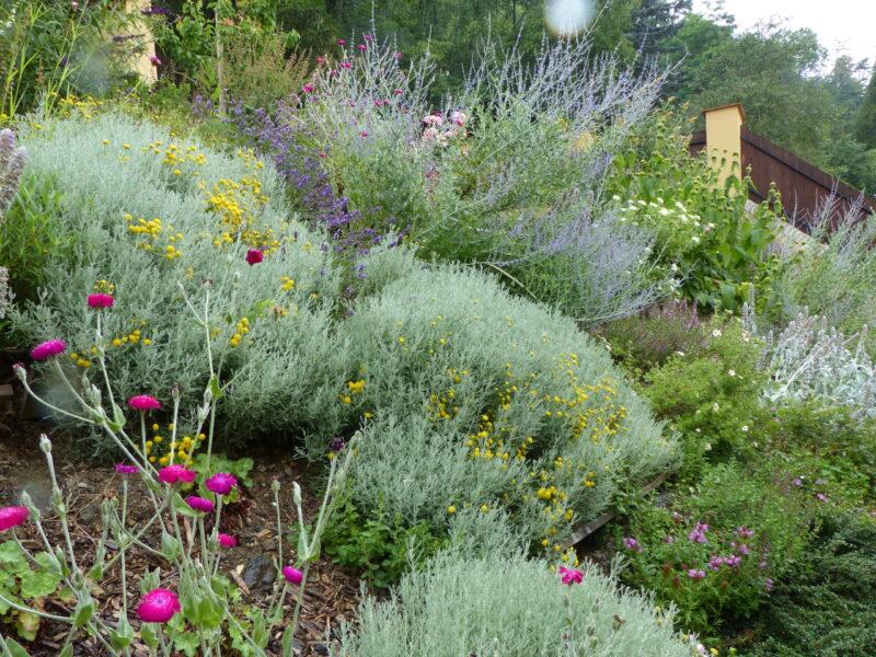 Zahrada3
