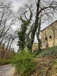 brectan-na-stromech